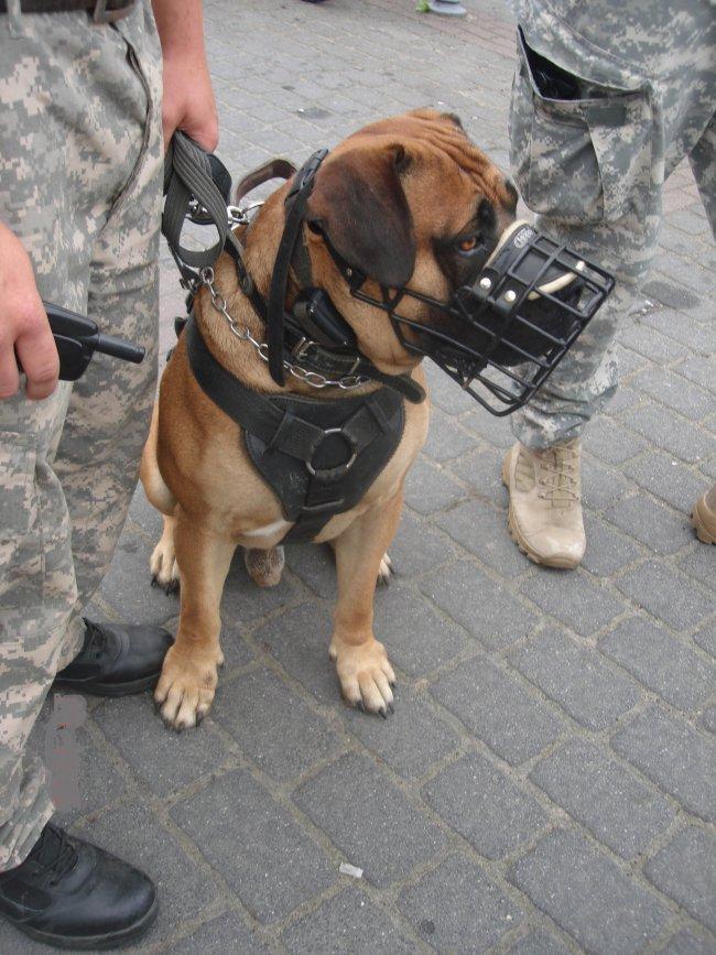 Patrol z psami patrolowo-wartowniczymi